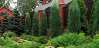 Хвойники в саду и их дизайн фото