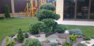 Дизайн сада с хвойными растениями